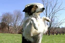 America's Cutest - Dog: Happy Hounds
