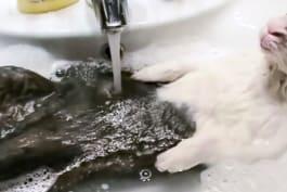 Bad Dog - Pampered Pets