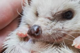 Too Cute! - Puppies and Prickles: Pint-Sized