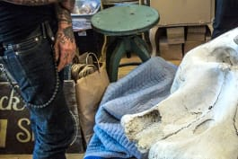 Oddities - Elephant Skull in the Room