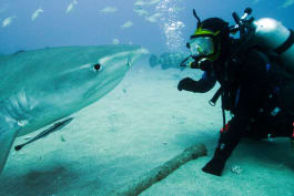 Shark Week - Shark Trek