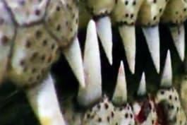 Monster Week 2016 - Man-Eating Super Croc