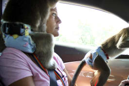 Preposterous Pets - My Monkey Mum and Cantering with Camels