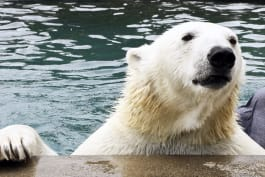 Preposterous Pets - Lions, Bison and Bears, Oh My!
