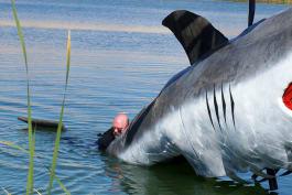 MythBusters - MythBusters vs. Jaws