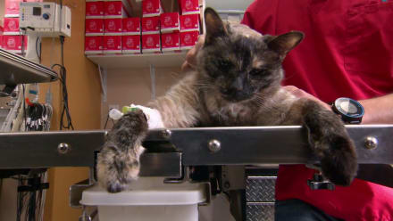 Dr. Jeff: Rocky Mountain Vet - Miracle Cat