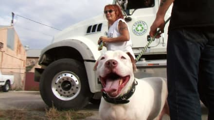 Pit Bulls & Parolees - Perfect Match