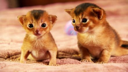 Too Cute! - Too Cute! Kittens