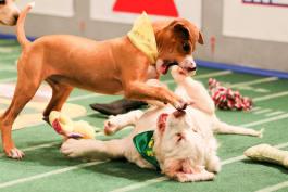Puppy Bowl - Puppy Bowl XI