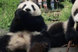 Panda Republic - Panda Republic