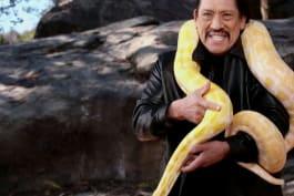 Snaketacular - Snaketacular
