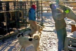 Dr. Jeff: Rocky Mountain Vet - Temperature's Rising