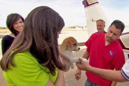 Dr. Jeff: Rocky Mountain Vet - Saved by the Sky