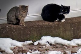 My Cat From Hell - Gotham Feral Cats