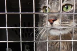 My Cat From Hell - Twinkle, Twinkle, Little Scar