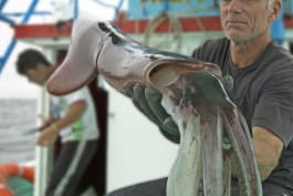 River Monsters - Devil of the Deep