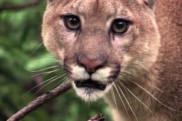 Monster Week 2016 - Urban Predator: Lion on the Loose