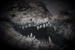 Monster Week 2016 - Weird, True & Freaky: Real Monsters