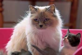 The Secret Life of Pets - Episode 6