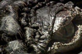 Monster Week 2016 - Lair of the Killer Crocs
