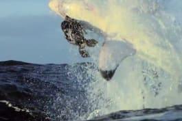 Shark Week - Great White Invasion