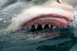 Shark Week - Sharktacular 2016