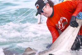 Shark Week - Tiger Beach