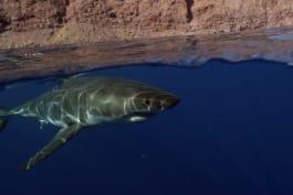 Shark Week - Shallow Water Invasion
