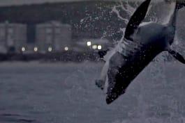 Shark Week - Sharksanity 3