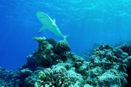 Shark Week - Nuclear Sharks