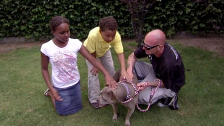 Pit Bulls & Parolees - Breaking Point