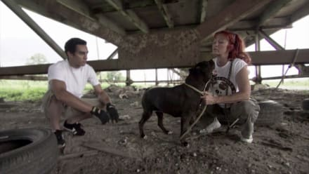Pit Bulls & Parolees - Mission of Mercy
