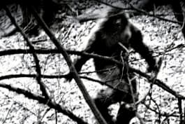 Monsters & Mysteries Unsolved - Sasquatch Planet