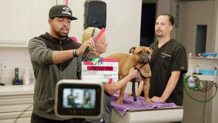The Vet Life - Lights, Camera, Action!