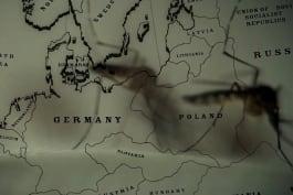 Nazi Secret Files - Mad Science: Nazi Killer Bugs