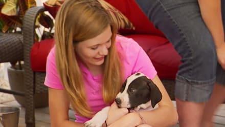 Pit Bulls & Parolees - Puppy-Palooza