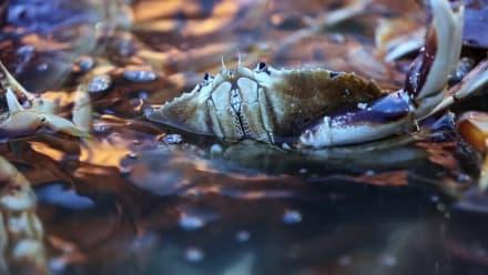 Deadliest Catch: Dungeon Cove - Final Crossing