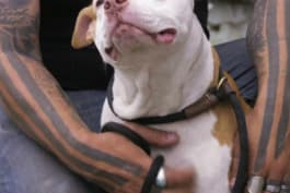 Pit Bulls & Parolees - Redeemed