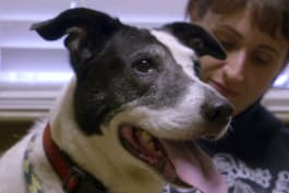 Pit Bulls & Parolees - Pit Bulls & Parolees: Kindness of Strangers