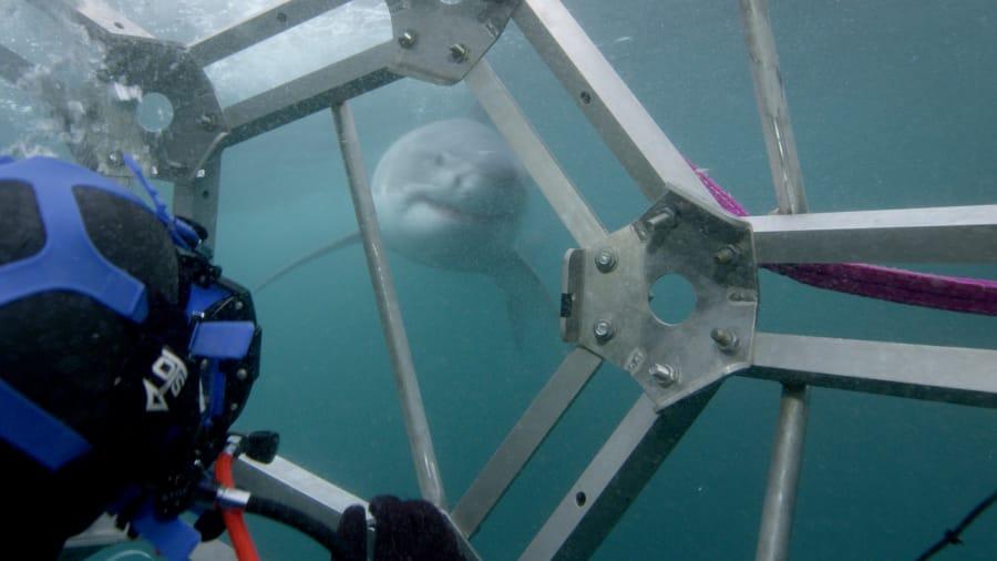 Predators Up Close - Sharks