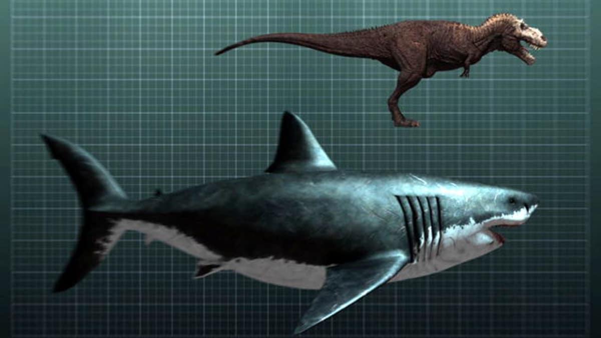 The Nightmarish Megalodon - Shark Week | Discovery