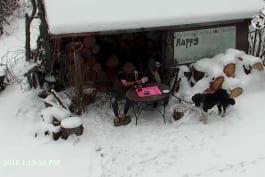 Alaska: The Last Frontier - Animal Tea Party