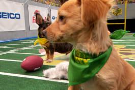Puppy Bowl - Inside The Bowl: Slowest Streaker