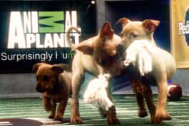 Puppy Bowl - Inside The Bowl: Double Touchdown
