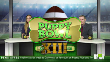 Puppy Bowl - Puppy Bowl XIII Preview: Countdown to Game Day