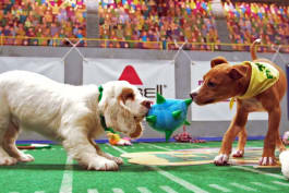 Puppy Bowl - Puppy Bowl: Best of Inside the Bowl