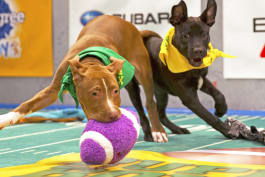 Puppy Bowl - Puppy Bowl XIII: Texas-Sized Cuteness
