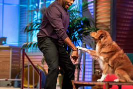 Animal Nation with Anthony Anderson - George Lopez; Suzy Nakamura; Agility Dogs