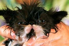 Too Cute! - Too Cute!: Slow Motion Kittens