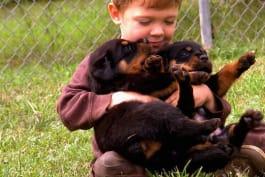 Too Cute! - Wrestlin' Rottweiler Pups